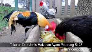 Takaran Dan Jenis Makanan Ayam Petarung S128