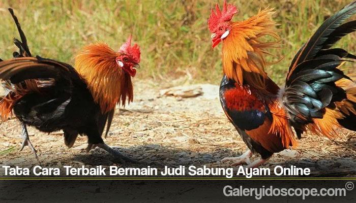 Tata Cara Terbaik Bermain Judi Sabung Ayam Online
