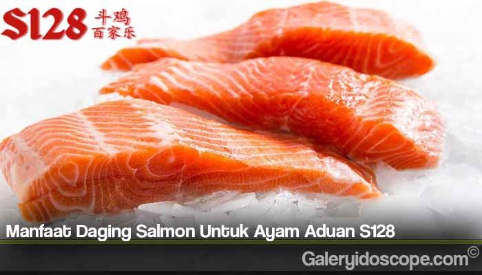 Manfaat Daging Salmon Untuk Ayam Aduan S128