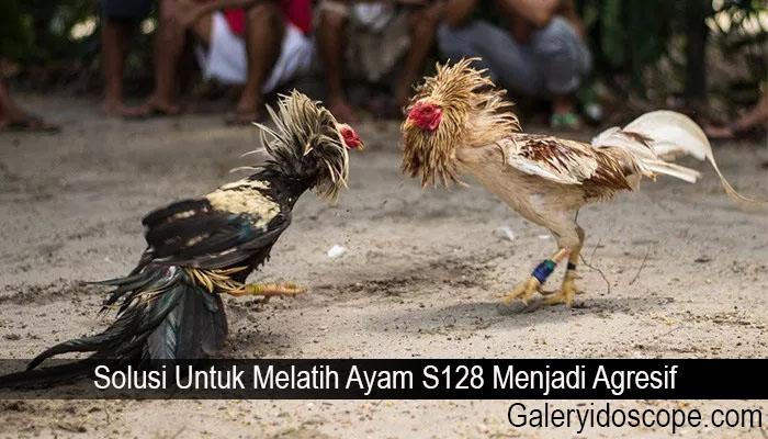 Solusi Untuk Melatih Ayam S128 Menjadi Agresif