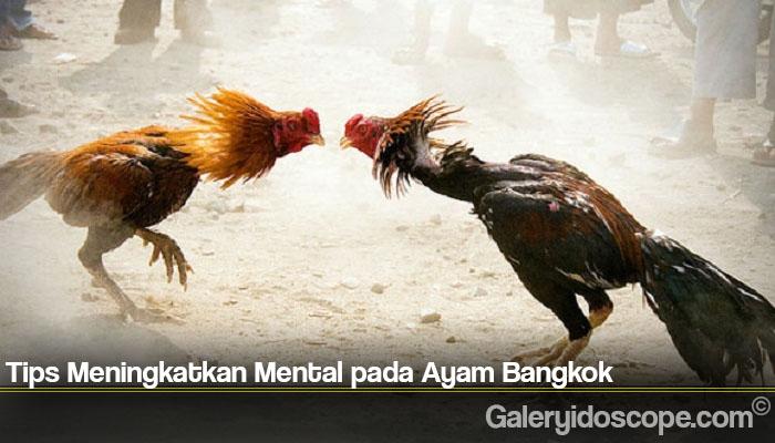 Tips Meningkatkan Mental pada Ayam Bangkok