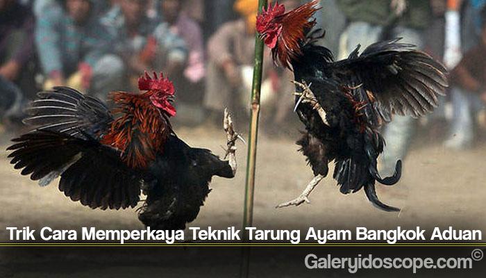 Trik Cara Memperkaya Teknik Tarung Ayam Bangkok Aduan